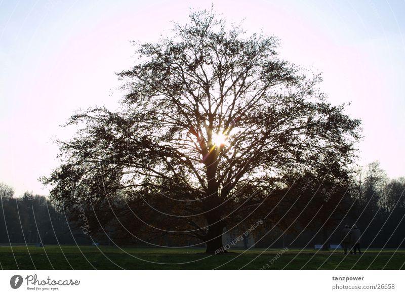 enlightenment Tree Back-light Awareness large garden Sun