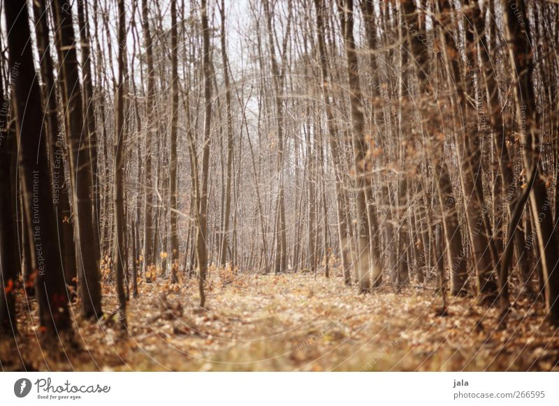 spring forest Environment Nature Landscape Plant Spring Tree Bushes Forest Natural Brown Colour photo Exterior shot Deserted Day Light