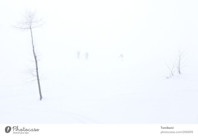 Human being Nature Tree Winter Loneliness Snow Fog Snowscape Ski resort Hazy Snow layer Bright background
