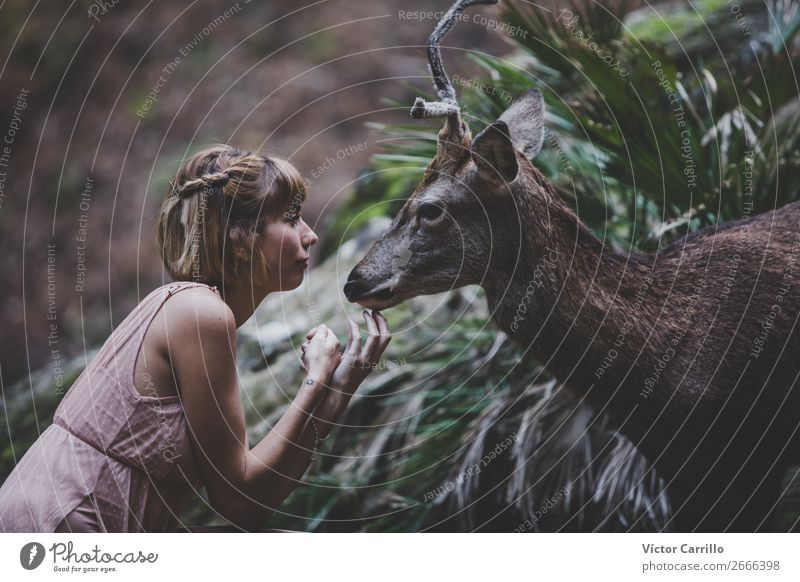 A Young Beautiful Young Woman Feeding a Deer Lifestyle Elegant Style Design Exotic Human being Feminine Young woman Youth (Young adults) Adults Plant Forest