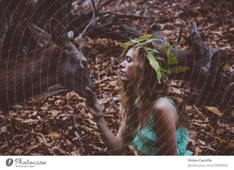 A Young Beautiful Young Woman Feeding a Deer Human being Nature Youth (Young adults) Young woman Animal Joy Forest Lifestyle Adults Environment Natural Feminine
