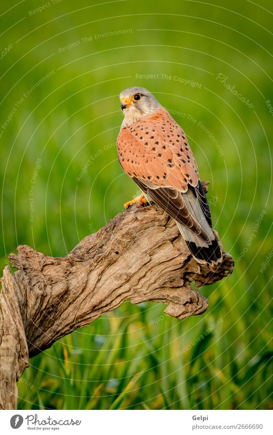 Beautiful bird of prey on a trunk Woman Nature Green White Animal Adults Natural Bird Brown Wild Feather Observe Living thing Beauty Photography European