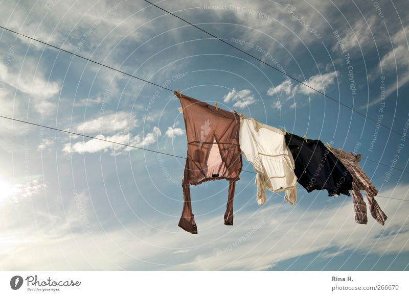 and even more laundry on the line II Sky Clouds Summer Beautiful weather T-shirt Shirt Blouse Hang Authentic Fresh Bright Blue White Cleanliness Clothesline Dry