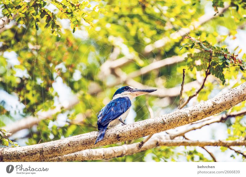 Vacation & Travel Nature Blue Beautiful Tree Animal Far-off places Tourism Garden Exceptional Freedom Bird Trip Wild animal Adventure Fantastic