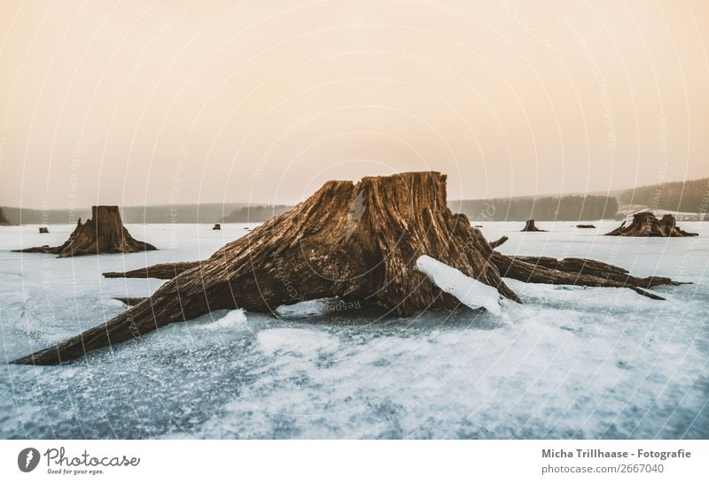 Roots in the icy lake Environment Nature Landscape Water Sky Cloudless sky Winter Climate Ice Frost Snow Tree Tree stump Tree trunk Lake Relaxation Freeze Cold