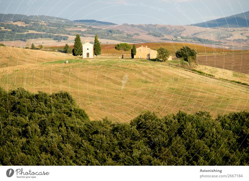 Chapel in the distance I Environment Nature Landscape Plant Sky Horizon Summer Tree Grass Meadow Field Forest Hill Siena Tuscany Italy