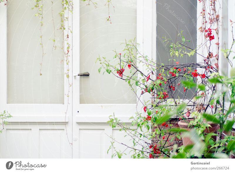 Paris Spring Plant Bushes Leaf Blossom Town House (Residential Structure) Building Architecture Window Door Bright Backyard Atelier Nature Colour photo
