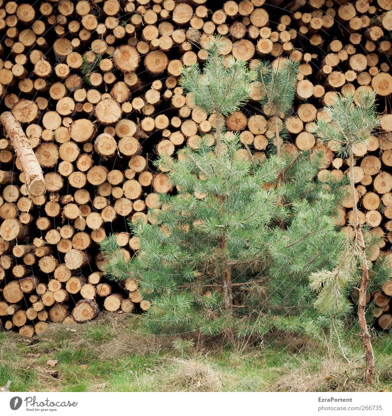 Nature Green Tree Plant Forest Environment Yellow Wood Grass Brown Round Square Tree trunk Stack Pine Agricultural crop