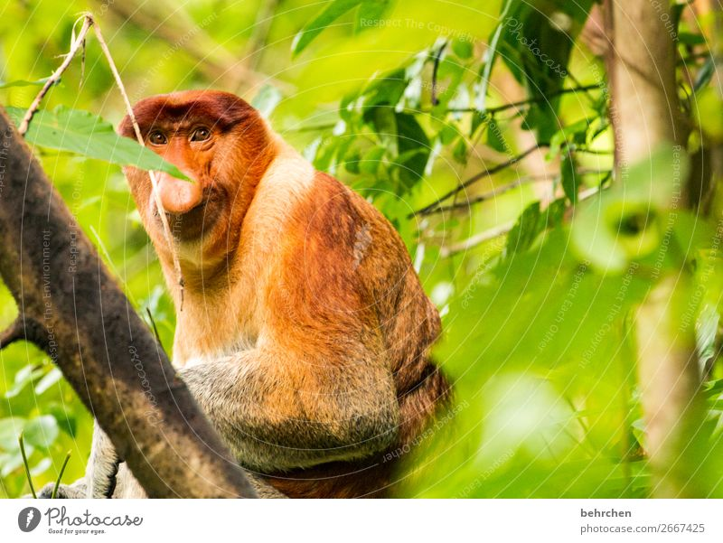 one moment Vacation & Travel Tourism Trip Adventure Far-off places Freedom Nature Tree Leaf Virgin forest Wild animal Animal face Pelt Monkeys Eurasian monkey 1