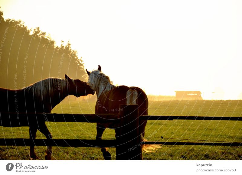 Together Summer Nature Landscape Sunrise Sunset Sunlight Beautiful weather Meadow Farm animal Horse 2 Animal Pair of animals Esthetic Moody Spring fever Loyalty