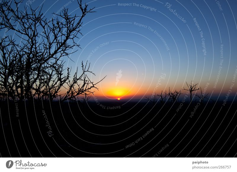 Sunrise and thorns Blue Bushes Clear sky Desert Landscape Negative Red Silhouette Sky Thorn Thorny Yellow