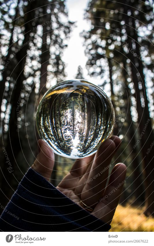 Tall Forest Trees in Glass Ball Reflection Beautiful Relaxation Calm Vacation & Travel Tourism Mountain Environment Nature Landscape Meadow Sphere Globe Breathe
