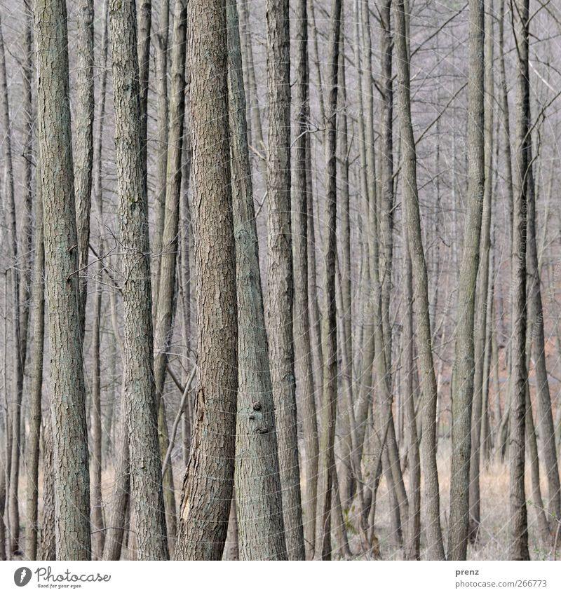 Nature Tree Plant Forest Environment Wood Gray Bushes Thin Tree bark