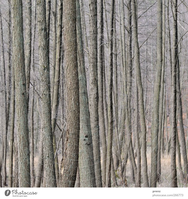 slender Environment Nature Plant Tree Bushes Forest Wood Gray Tree bark Thin Colour photo Exterior shot Deserted Day Shallow depth of field Central perspective