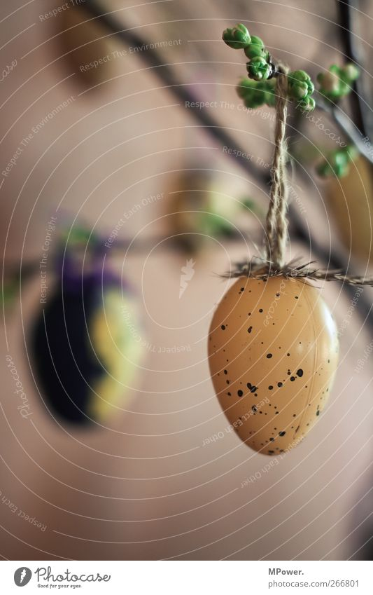 latecomer Plant Blossom Warmth Easter Easter egg Bouquet Decoration Jewellery Egg Spotted Feather Brown Tradition Hang Colour photo Detail Deserted