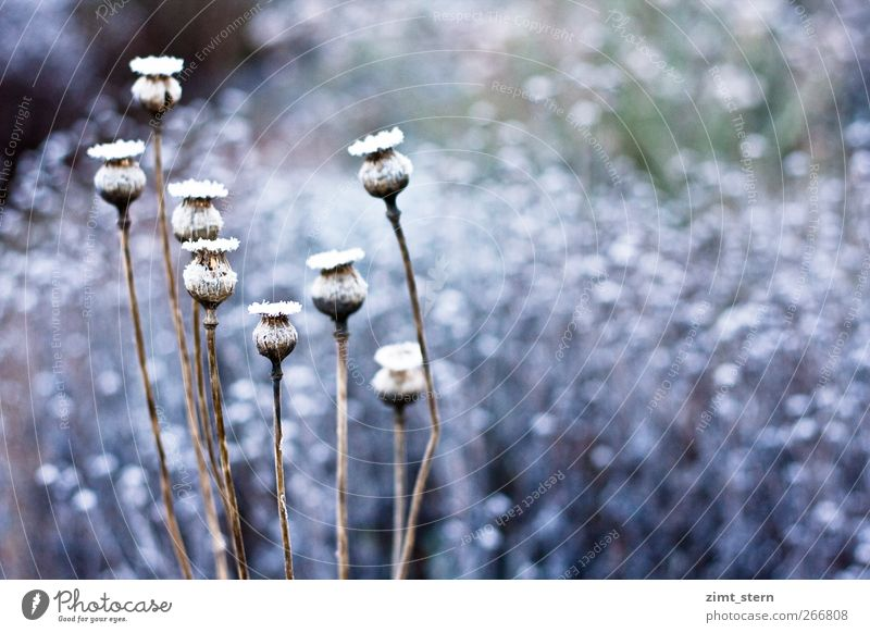 Nature Blue White Plant Winter Cold Snow Garden Art Ice Brown Together Contentment Dance Natural Esthetic
