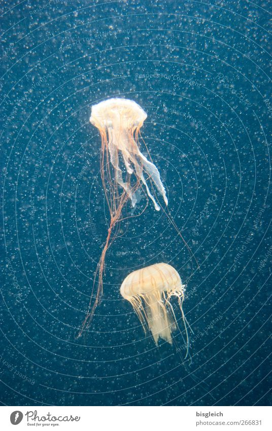 Deep-sea Diver II Water Ocean Animal Jellyfish Aquarium 2 Swimming & Bathing Blue Tentacle Colour photo Underwater photo Deserted Artificial light