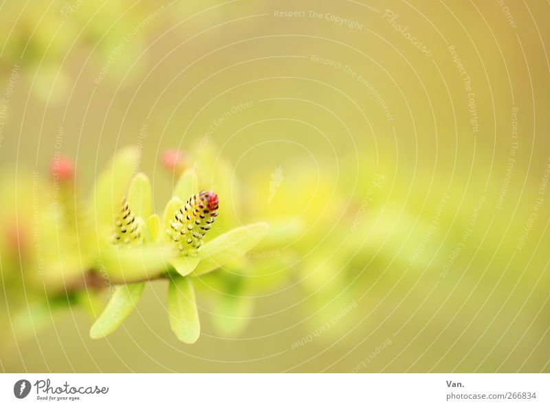 light Nature Plant Spring Bushes Leaf Twig Bud Garden Fresh Bright Beautiful Warmth Soft Yellow Green Red Colour photo Subdued colour Exterior shot Detail