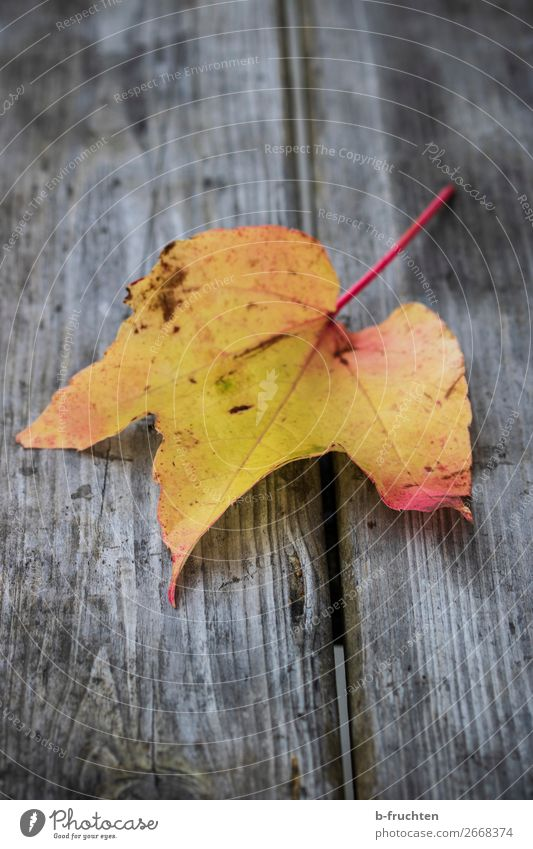 autumn leaf Calm Autumn Plant Leaf Park Wood Select To dry up Dirty Dark Yellow Colour Nature Dream Moving (to change residence) Decline Transience Change