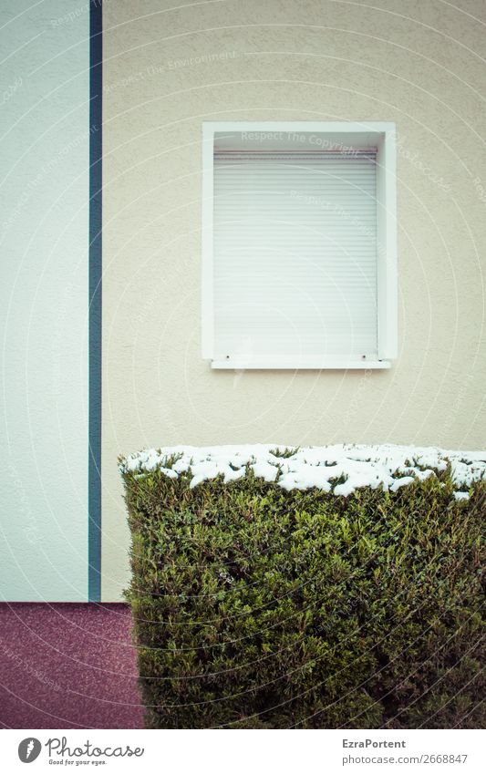 Plant Green House (Residential Structure) Winter Window Architecture Wall (building) Cold Snow Building Wall (barrier) Facade Gray Line Bushes Individual