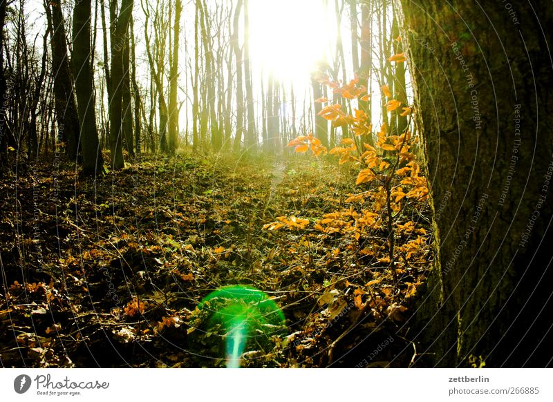 forest Environment Nature Landscape Sunlight Spring Winter Climate Climate change Weather Beautiful weather Park Meadow Forest Dream Undergrowth Müritz