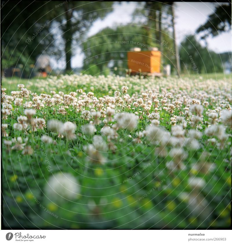 sumsenparadies Lifestyle Leisure and hobbies keep beekeepers Garden impecker Environment Nature Plant Animal Spring Climate Beautiful weather Grass Blossom