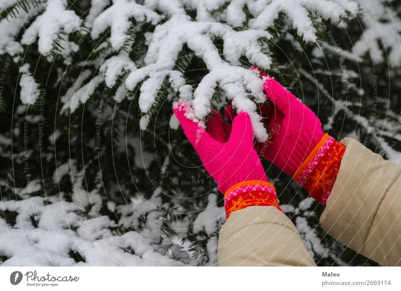 Red gloves Cedar Feasts & Celebrations Christmas & Advent Cold December Fir tree Forest Frost Girl Gloves Green Knitted Nature Natural New Exterior shot