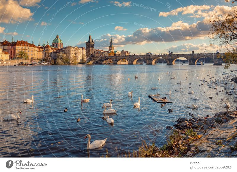 View of Prague Old Town with Charles Bridge Wide angle Deep depth of field Exterior shot Colour photo Neo baroque Strakova Academy Idyll Horizon Multicoloured