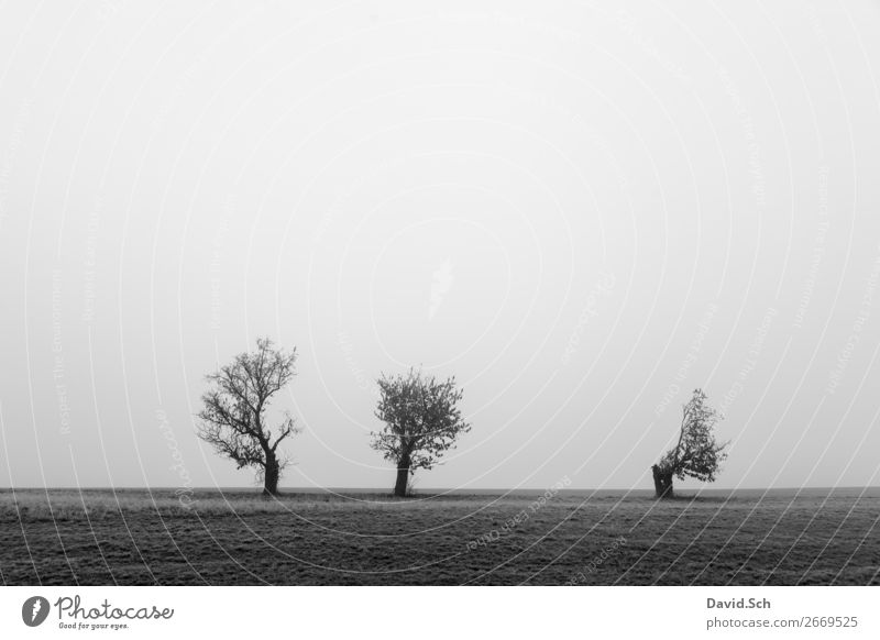 trees in the fog Environment Nature Landscape Sky Autumn Bad weather Fog Tree Meadow Field Dark Gray Black Emotions Moody Sadness Calm Loneliness Weathered 3