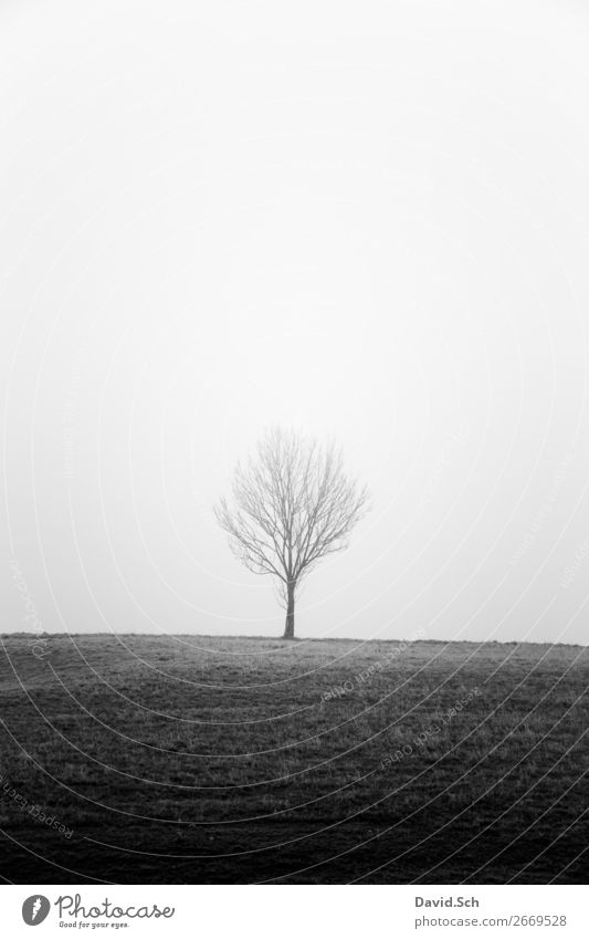 Tree in the fog Environment Nature Landscape Sky Autumn Bad weather Fog Meadow Field Hill Dark Gray Black Emotions Moody Calm Sadness Loneliness