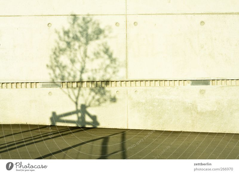 Nature City Tree Environment Wall (building) Architecture Garden Wall (barrier) Building Park Climate Concrete Good Beautiful weather Manmade structures