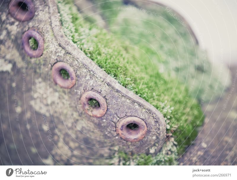 Shoe weathered and overgrown with moss Work of art Leather Boots Collector's item Old Trashy Brown Green Unwavering Creativity Carpet of moss Surface Eyelet