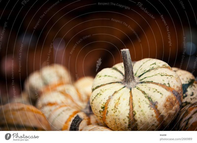 Autumn Small Brown Natural Food Healthy Eating Authentic Decoration Vegetable Organic produce Autumnal Hallowe'en Pumpkin Vegetarian diet Autumnal colours