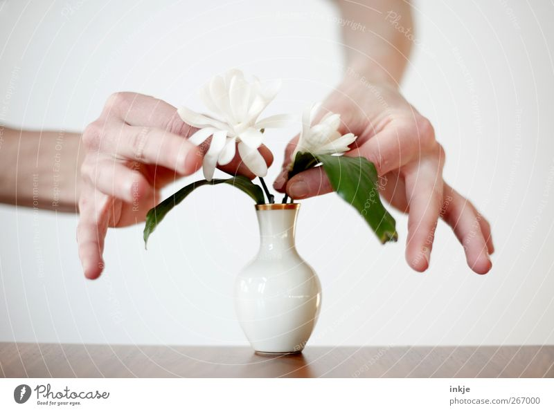 Human being Hand White Flower Life Emotions Moody Contentment Leisure and hobbies Living or residing Stand Decoration Creativity To hold on Pure Blossoming