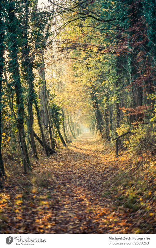 Path with colorful trees, sun is shining trough it in autumn Life Harmonious Vacation & Travel Sun Nature Landscape Plant Earth Autumn Weather Tree Flower Leaf