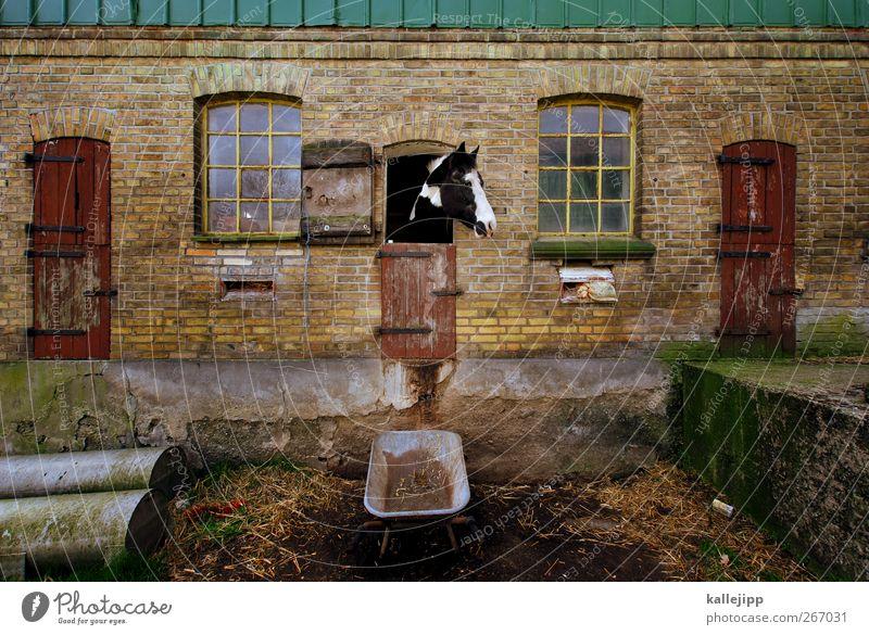 Animal Horse Pelt Animal face Agriculture Box Feeding Forestry Farm animal Barn Wheelbarrow
