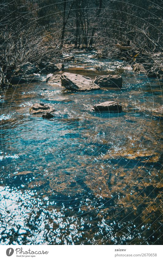 A river flowing with some big stones in it sorrounded by bare trees Beautiful Vacation & Travel Tourism Adventure Waves Winter Mountain Hiking Environment