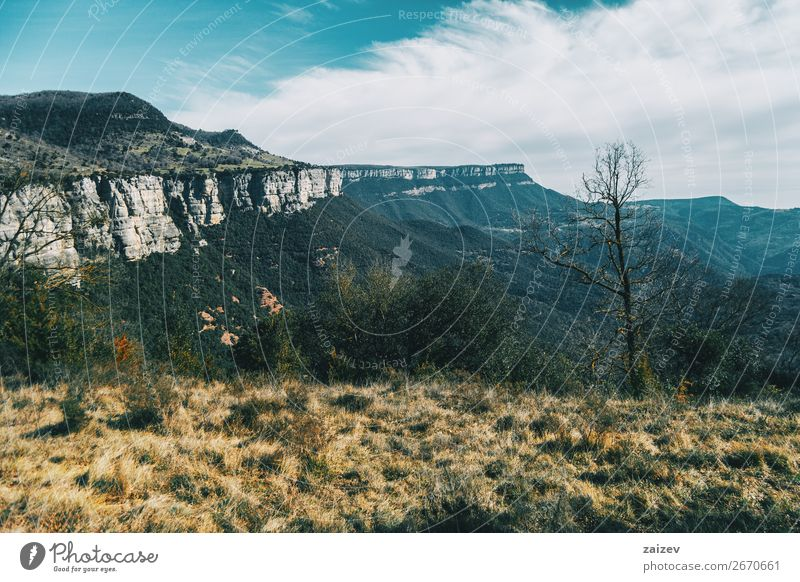 A great cliff that stretches to the sky and a bare tree on the grass Beautiful Calm Vacation & Travel Adventure Mountain Hiking Wallpaper Environment Nature