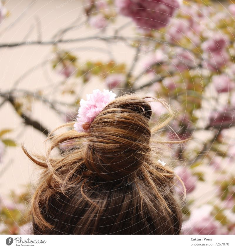 pink queen Environment Nature Plant Spring Summer Tree Flower Leaf Blossom Accessory Jewellery Hair accessories Hair and hairstyles Brunette Braids Fresh Bright