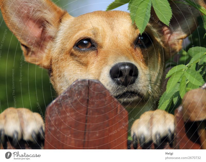 Dog Green White Animal Leaf Black Wood Life Garden Brown Head Joie de vivre (Vitality) Authentic Bushes Wait Uniqueness