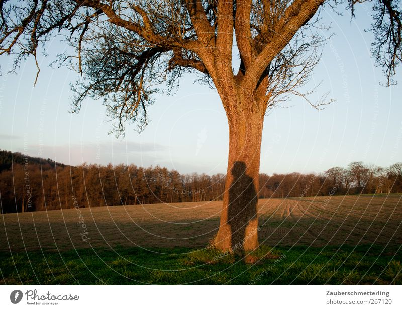 Nature Tree Calm Far-off places Think Dream Moody Field Wait Free Stand Uniqueness Observe Curiosity Protection Trust