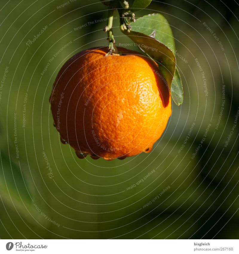 orange Food Fruit Orange Summer Agricultural crop Green Colour photo Exterior shot Deserted Copy Space bottom Day Shallow depth of field