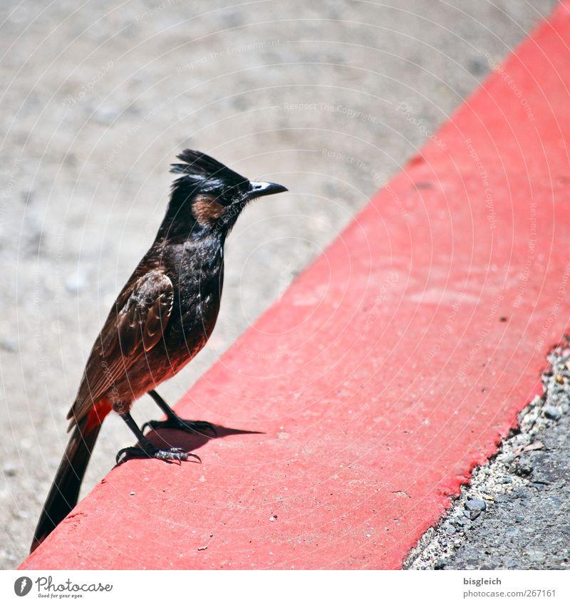 Red Animal Gray Stone Bird Sit Concrete