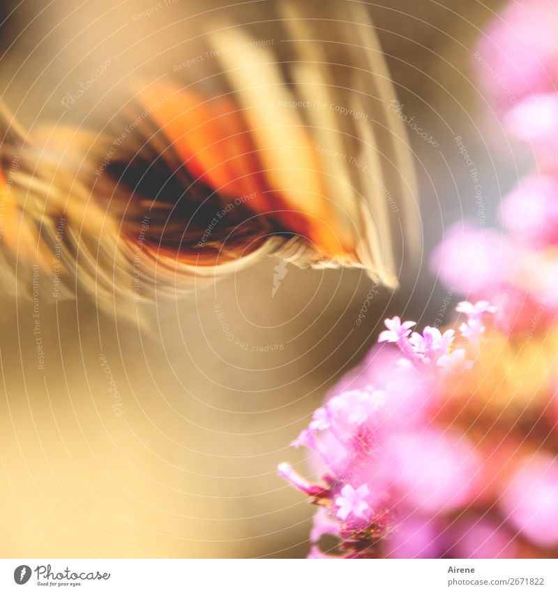 Nature Flower Animal Movement Freedom Orange Pink Flying Gold Speed Wing Surprise Butterfly Sustainability Irritation Enthusiasm