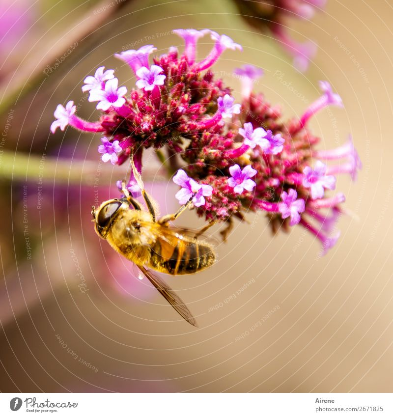 Trash! 2018 | suspended Flower Honey flora Ornamental plant Bee Work and employment Fragrance Hang Crawl Gold Pink Emotions Spring fever To enjoy