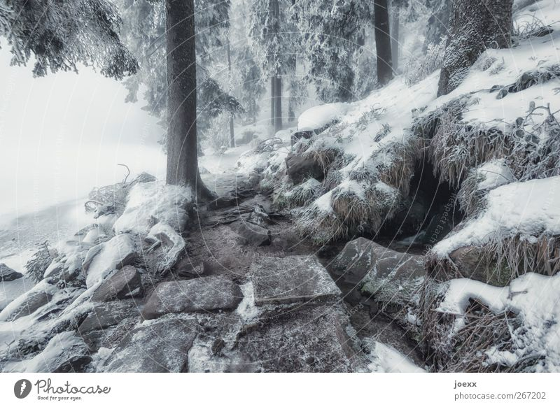 Nature White Tree Winter Black Forest Cold Snow Mountain Stone Ice Brown Fog Climate Frost Idyll