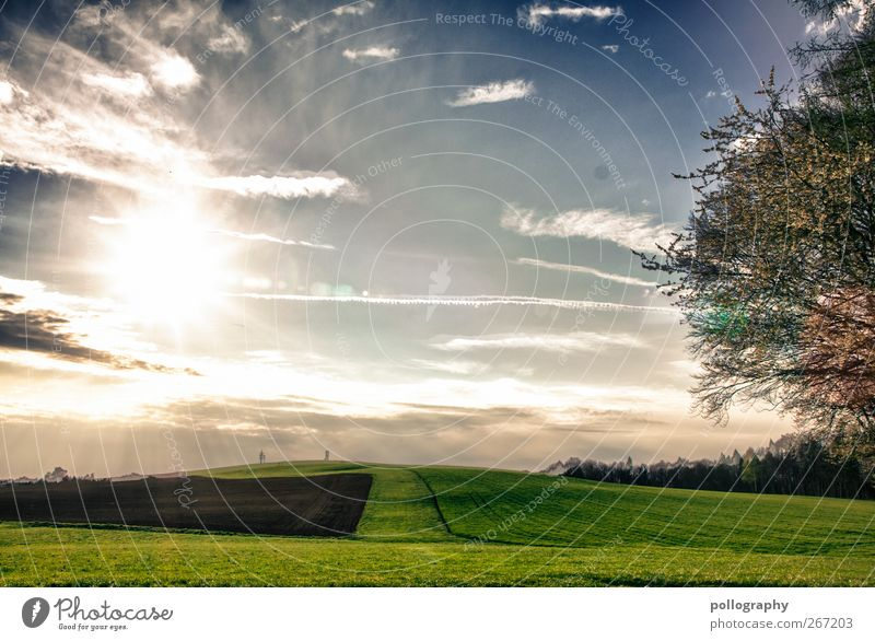 a wonderful day Environment Nature Landscape Plant Earth Sky Clouds Horizon Sun Sunrise Sunset Sunlight Spring Summer Weather Beautiful weather Fog Tree Meadow