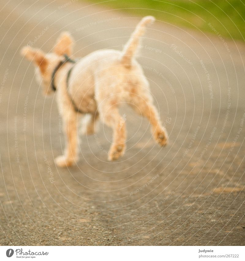 Dog Nature Summer Joy Animal Environment Yellow Street Autumn Playing Emotions Spring Happy Small Jump Field
