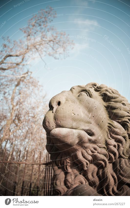 The lion would like to go! Art Sculpture Tree Park Wiesbaden Tourist Attraction Monument Animal Lion Lion's mane Lion's head Stone Looking Motionless