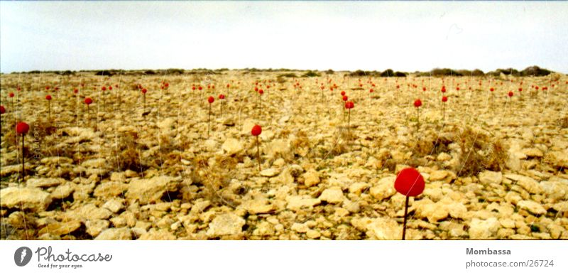 Landart-flowers in desert Beige Art Country art Formentera Panorama (View) Red Flower Leisure and hobbies Landscape Stone Desert Large Panorama (Format)